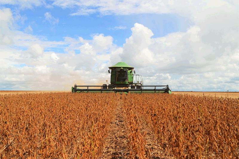Exportação Do Agronegócio Cai 11% Em Agosto